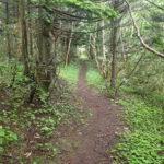 礼文島林の中を通る道