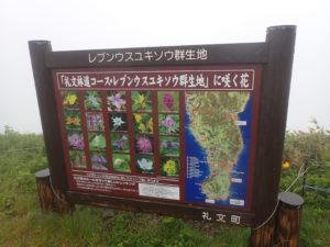 礼文島レブンウスユキソウ群生地の看板