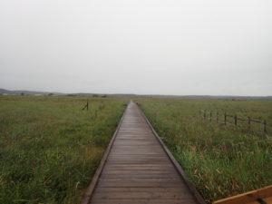 霧多布湿原琵琶瀬木道