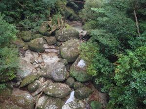 ヤクスギランド 林泉橋から河原を望む