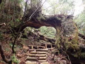 大木で出来たトンネル