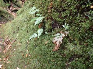 登山道周りの苔
