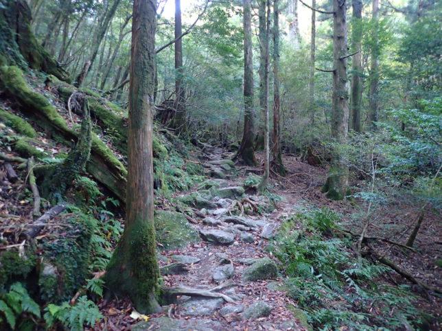 苔むす森の登山道
