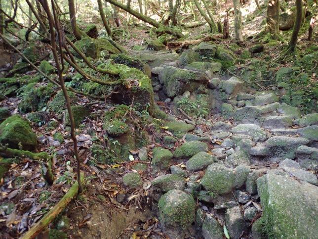 苔むす森を登る道