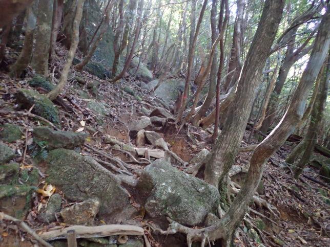 太鼓岩へ登る山道