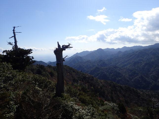 太鼓岩から見る森の様子