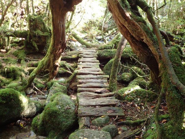 奉行杉コースの木道部分