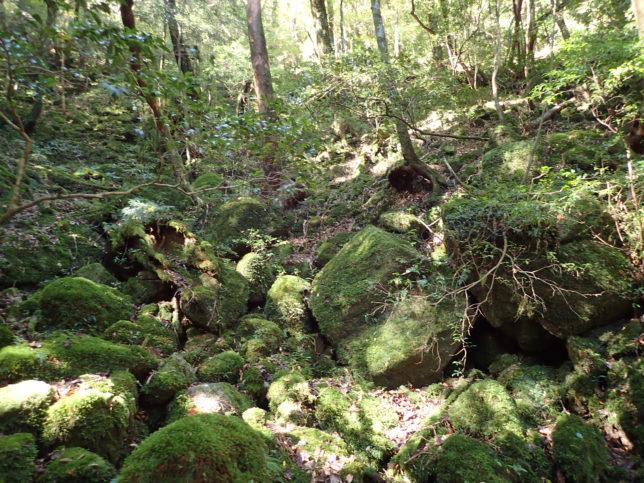 苔むす森にも似た光景