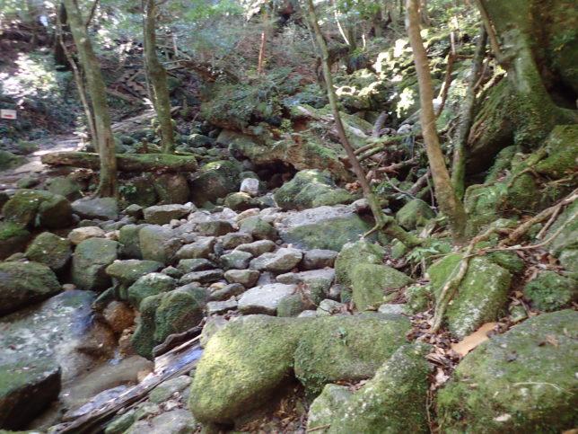 沢の石を伝って渡る。橋はない