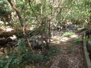 男淵・女淵の滝に至る道
