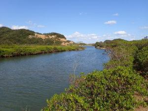 マングローブパーク 川沿いのメヒルギ