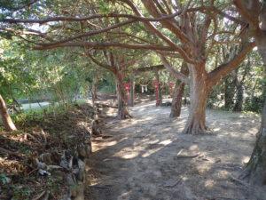 宝満神社木々に覆われた参道