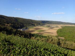 七色展望所からの防風林と田畑