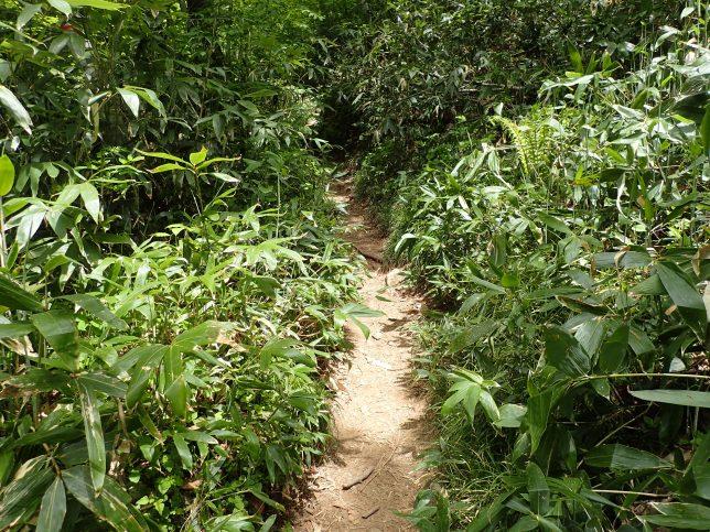草に覆われた登山道