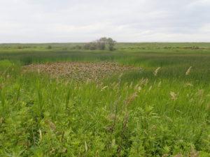 原生花園の中の沼