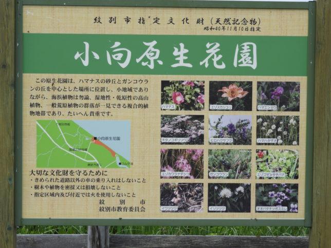 コムケ原生花園の案内