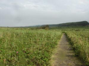 原生花園の中の散策路