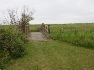 原生花園の中の沼へ向かう橋