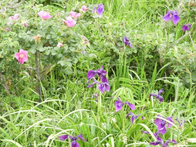 木道の周りの花々