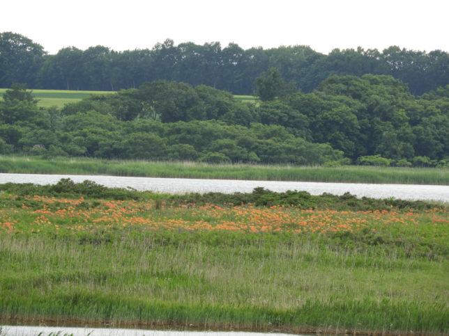 湖の近くの群生