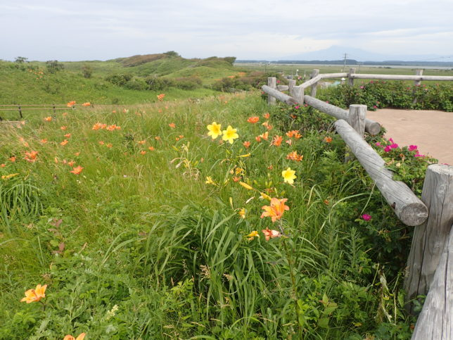 原生花園の花々