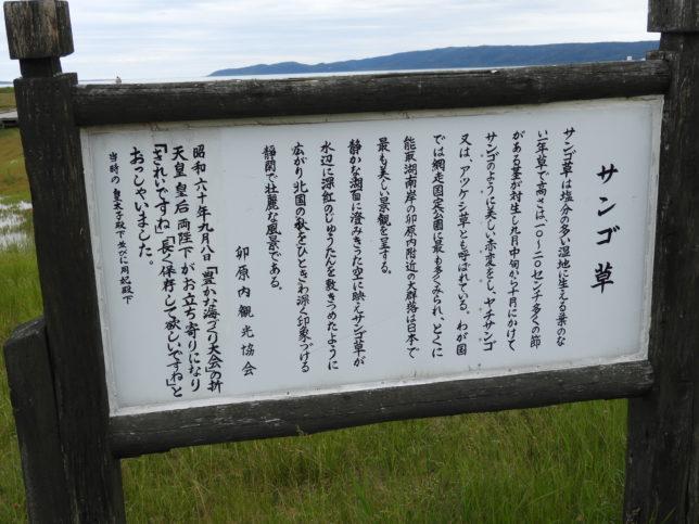 サンゴ草の説明