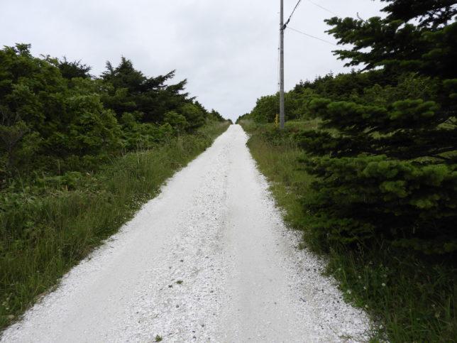 白い貝殻の道