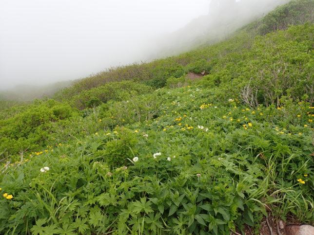 山頂前のお花畑