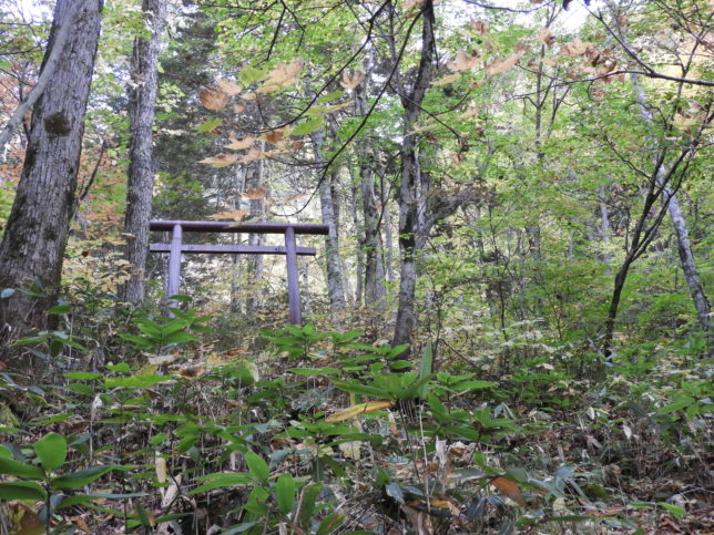 敷島の滝に向かう途中の天人峡三吉神社