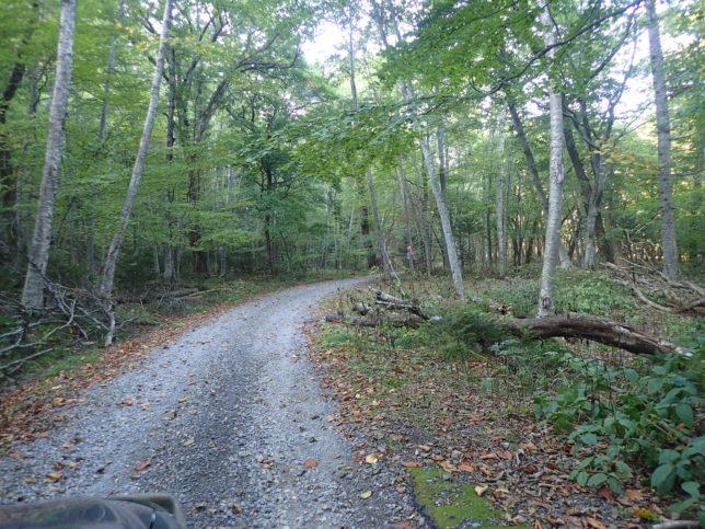 豊似湖への林道