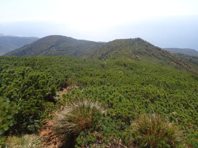ハイマツに覆われた登山道