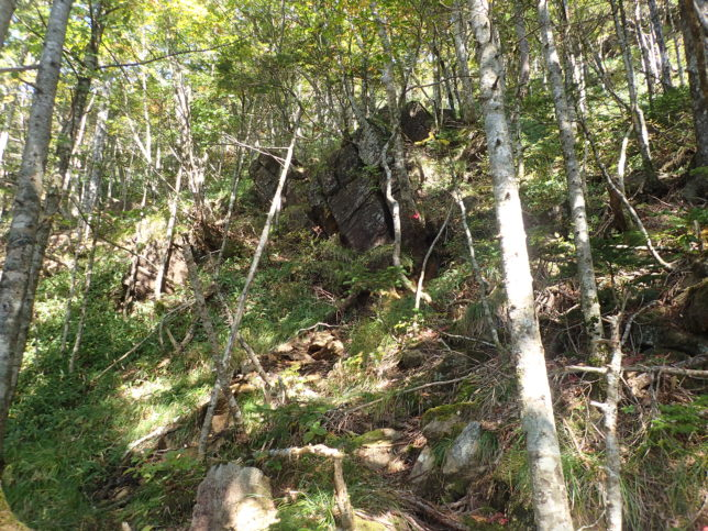 林の中を進む、落石注意
