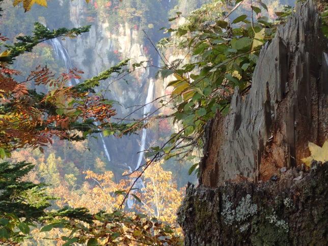 滝見台中腹から羽衣の滝