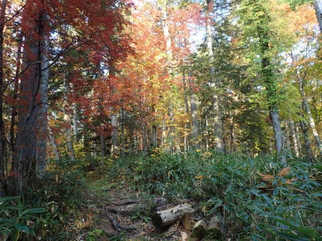 滝見台へ向かう道の紅葉
