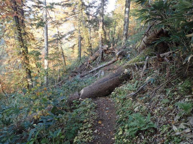 滝見台への山道