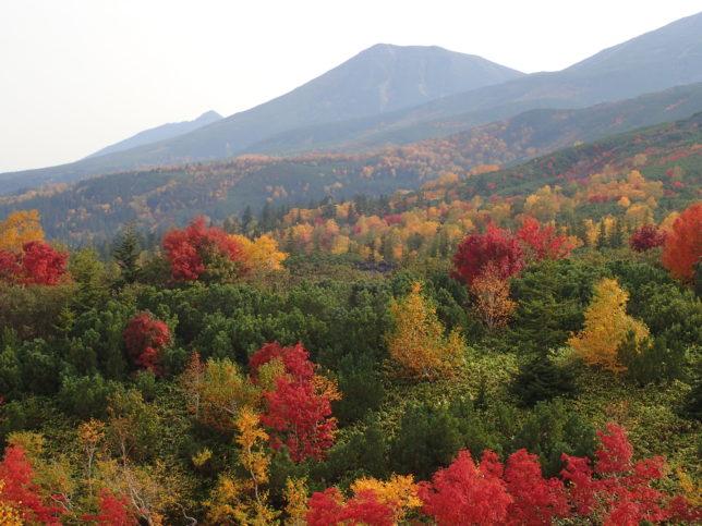 望岳台周辺の紅葉