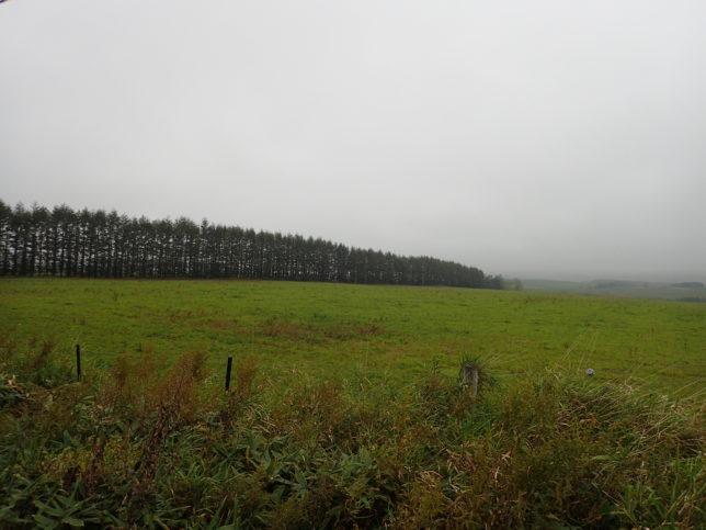 牧草地の中の防風林