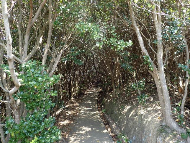 椿山展望台の遊歩道