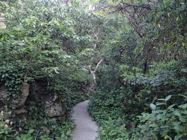 足摺岬の海岸遊歩道